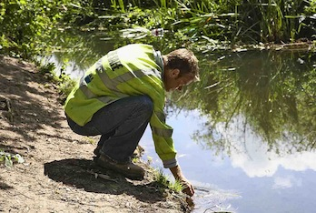 What Is The Role Of Environmental Consultants?